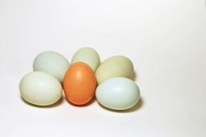 eggs-eggs-eggs-4-1325390-639x426 (1)