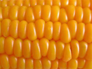 corn-1512939-1280x960